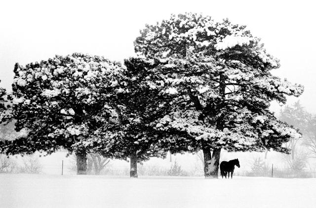 Horse_Snow_Trees