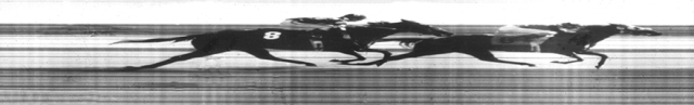 Horses at Turf Paradise racing past my home made finish line camera at Turf Paradise in 1982.